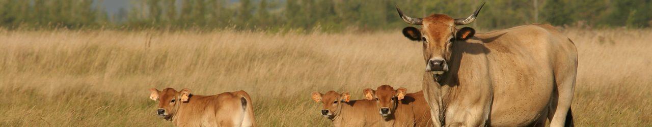 Mesures Agri-Environnementales
