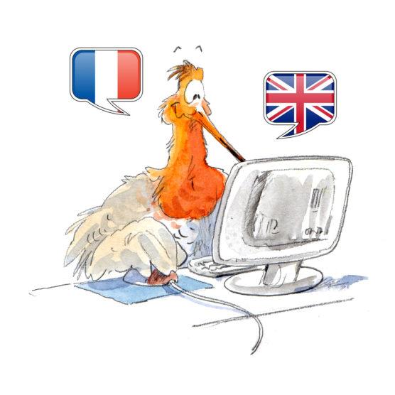 """Wader database : la base de données interactive """"limicoles bagués"""" ouverte aux anglophones !"""